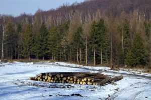 Делянка под вырубку леса