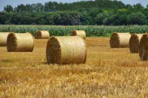 Как купить сельхозземлю?