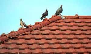 Крыша потекла что делать