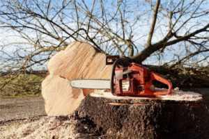 Можно ли вырубать деревья на своем участке